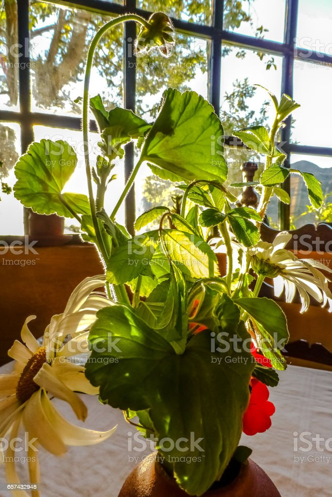 Bouquet of garden flowers, sun-drenched in front of a window stock photo