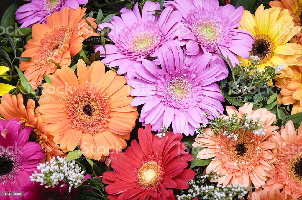 Bouquet of gerbera daisies royalty-free stock photo
