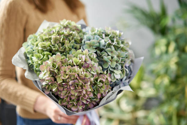 Bouquet of green flower. Beautiful hydrangea flowers in womans hands. the work of the florist at a flower shop. Fresh cut flower. stock photo