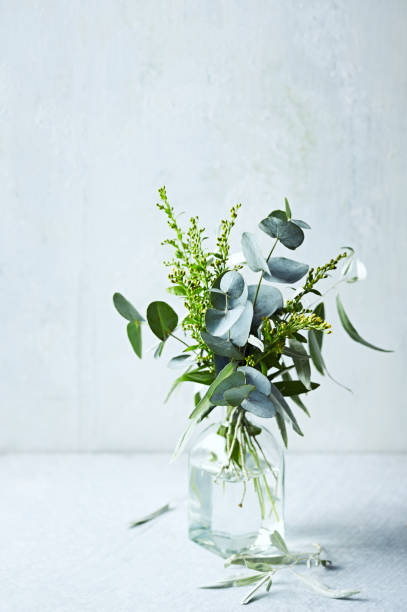 Bouquet of green tree branches (eucalyptus, wild olive) and yellow flowers in glass vase stock photo