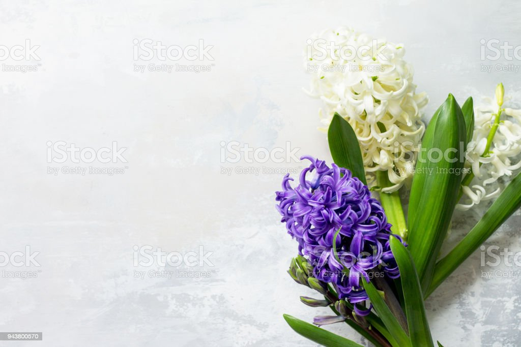 Bouquet Of Hyacinth Flower On Stone Background Or Slate Spring ...