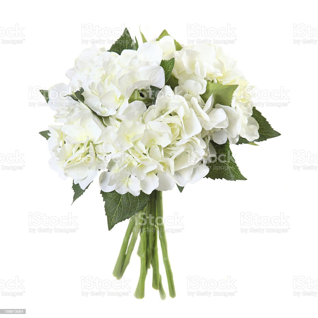 bouquet of hydrangeas on a white background stock photo