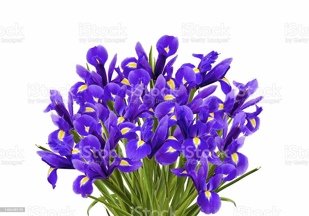 Mazzo Di Fiori Iris.Bouquet Di Iris Isolato Su Sfondo Bianco Fotografie Stock E