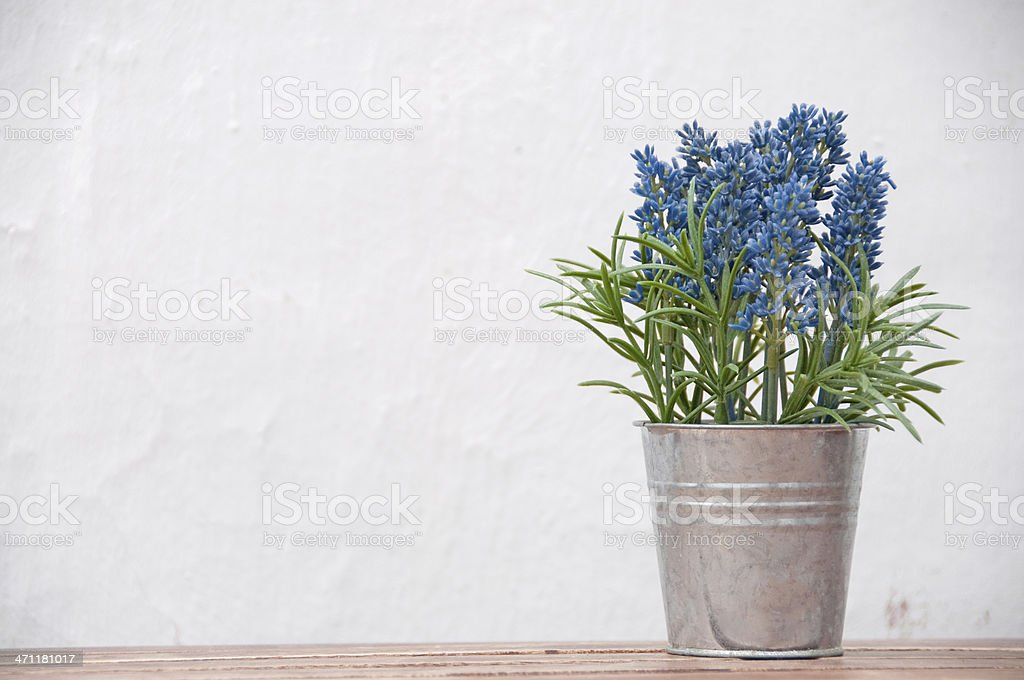 Bouquet  of lavender in a pail on white background stock photo