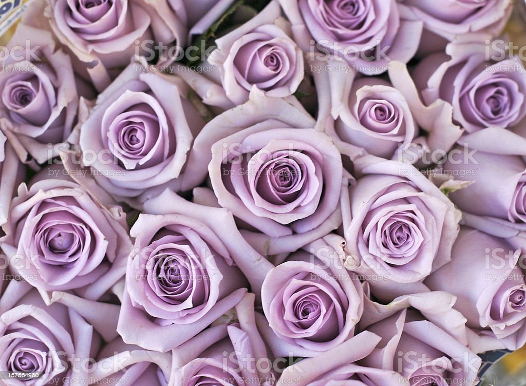 bouquet of lilac colored roses stock photo
