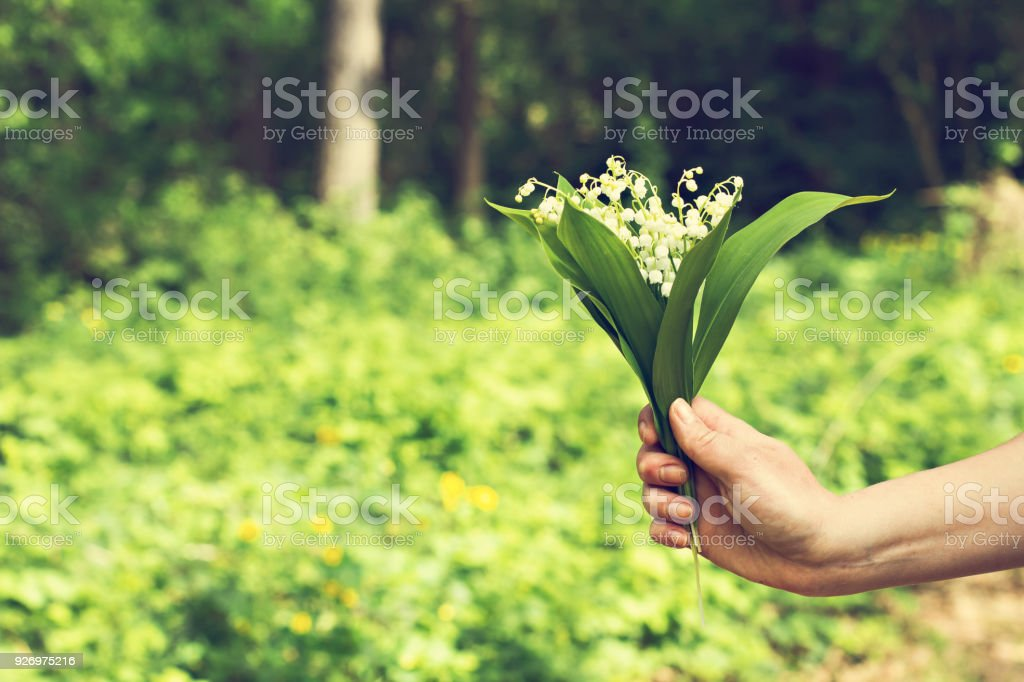 Lilies of the valley. A bouquet of lilies of the valley in a woman\'s...