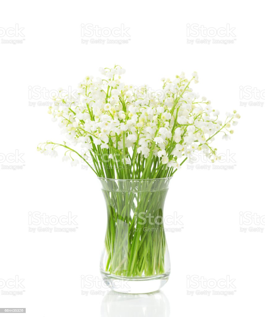 Bouquet of lilies of the valley isolated on white background stock bouquet of lilies of the valley isolated on white background royalty free stock photo izmirmasajfo