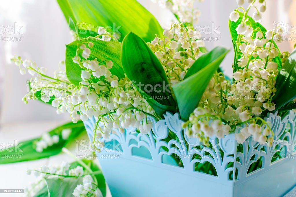 Bouquet of lilies of the valley 免版稅 stock photo