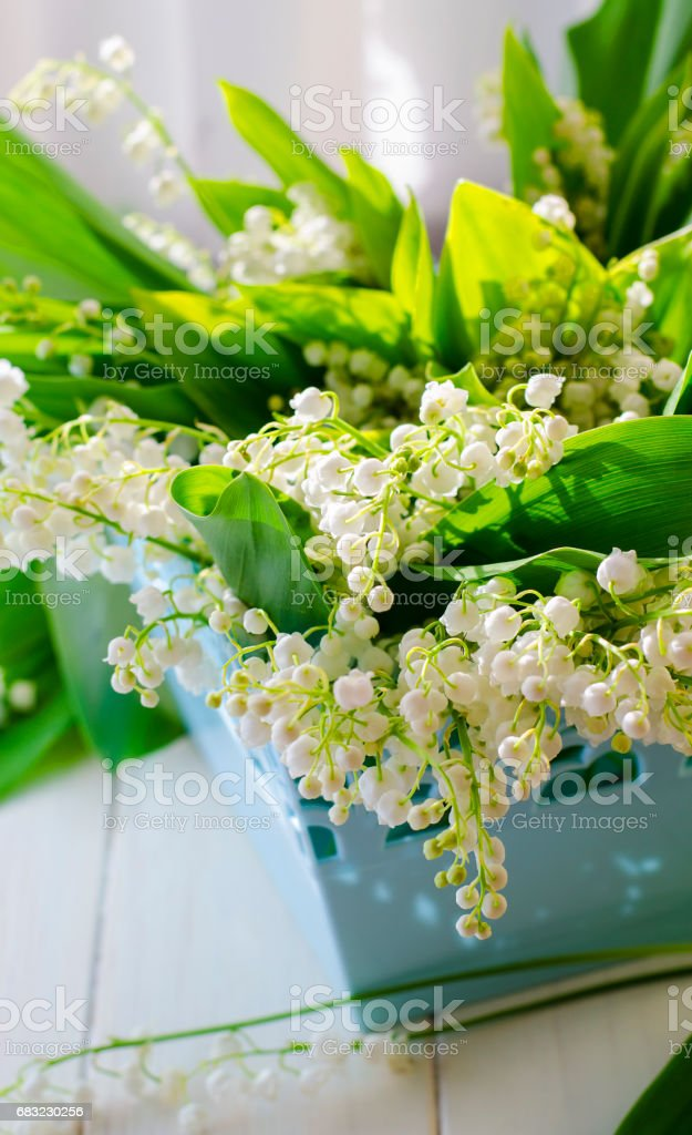Bouquet of lilies of the valley royalty-free 스톡 사진