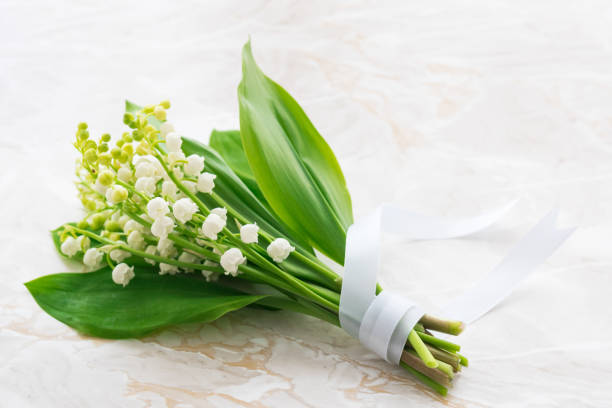Bouquet of Lilies of the Valley stock photo