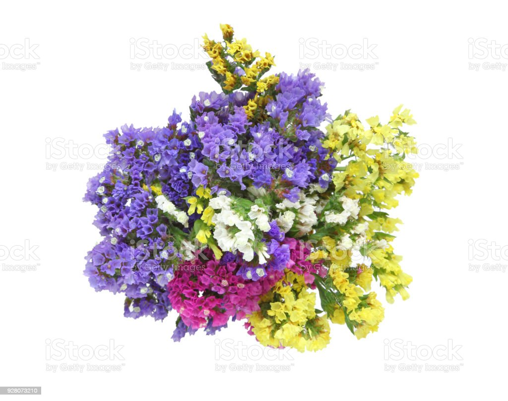 bouquet of Limonium in a white background stock photo