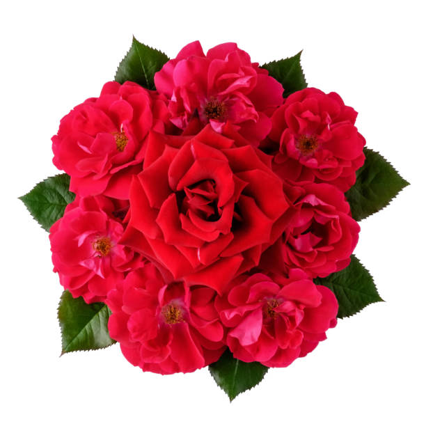 Bouquet of many red roses isolated on white picture id968590966?b=1&k=6&m=968590966&s=612x612&w=0&h=xyecntygst0jc1sjkdv9izlvaygtmmw a7knsfxb5rq=