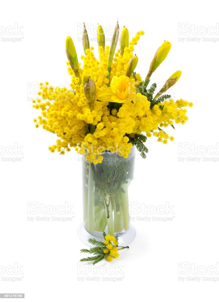 bouquet of mimosa and narcissus flowers isolated on white stock photo