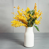 A bouquet of mimosa flowers in a white ceramic vase on a gray table. Selective focus.