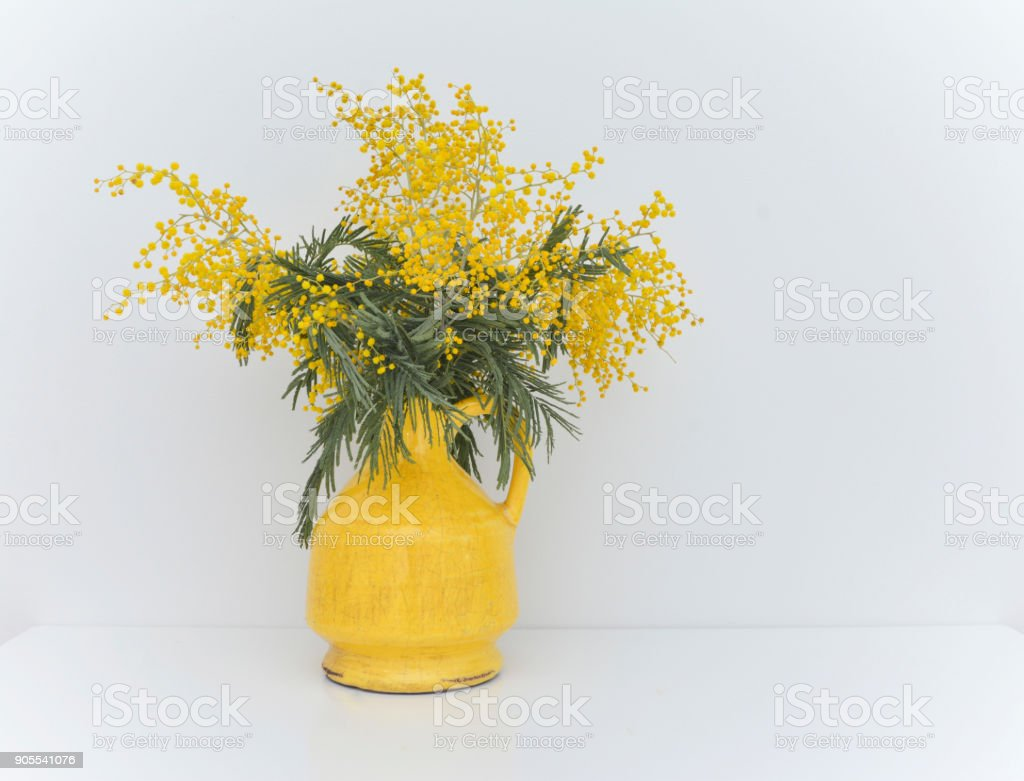 bouquet of mimosa in vintage cracked yellow vase stock photo