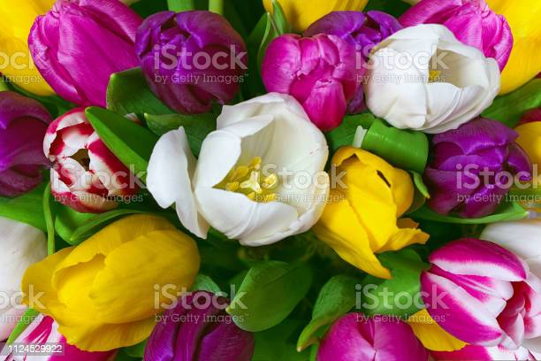 Bouquet of multicolor tulips fresh spring flowers floral background picture id1124529922?b=1&k=6&m=1124529922&s=612x612&h=v3hxlujy7radiy ij hnkigmqhiwna997pjm5eoe49e=
