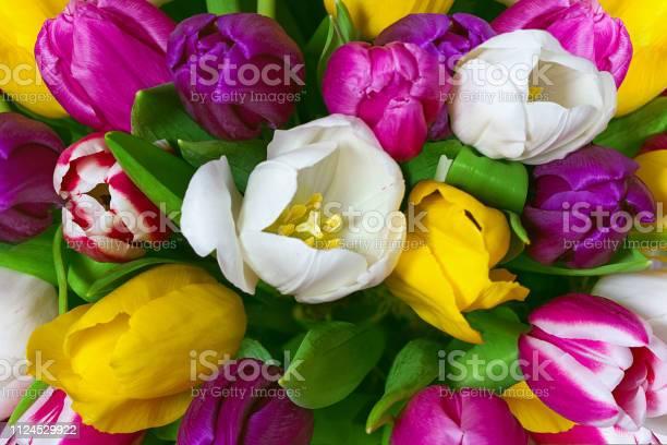 Bouquet of multicolor tulips fresh spring flowers floral background picture id1124529922?b=1&k=6&m=1124529922&s=612x612&h=v3hxlujy7radiy ij hnkigmqhiwna997pjm5eoe49e=