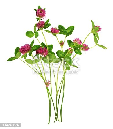 Clovers are herbaceous plants of the family Fabaceae, belonging to the genus Trifolium. The flowers look like pink and purple ponpons.