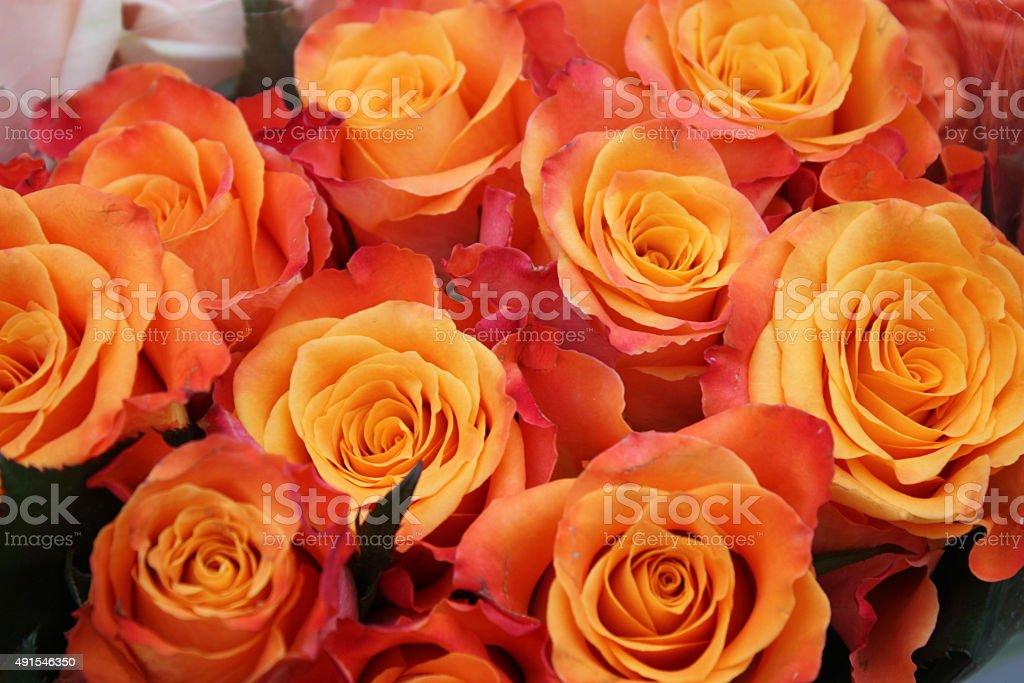 bouquet of orange roses stock photo