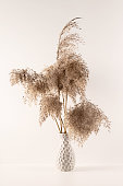 Bouquet of pampas grass in a vase on white background. Modern eco decor