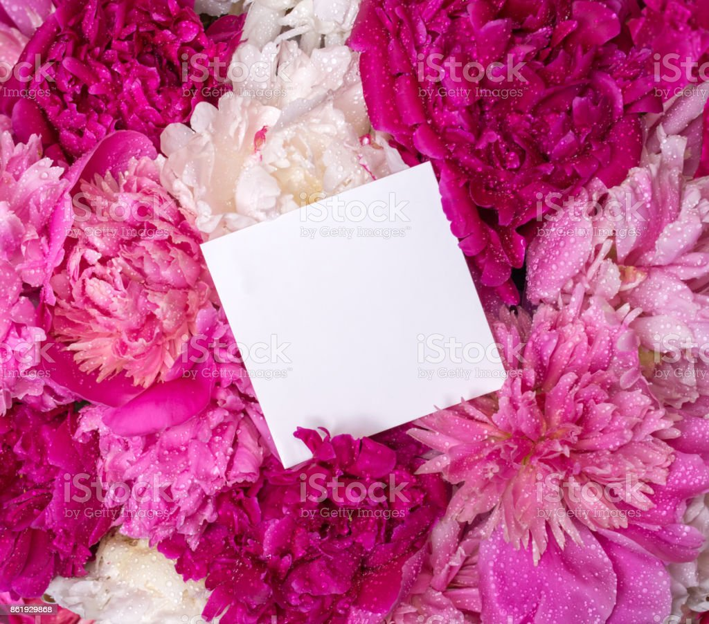 A bouquet of peonies and a note inside. Spring violet flowers stock photo