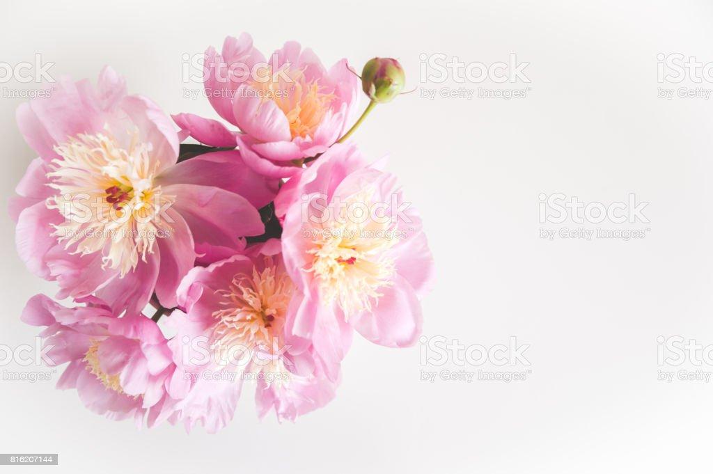 Bouquet Von Pfingstrosen Foto In Sanften Farben Guten Morgen Ich Wünsche Dir Einen Schönen Tag Platz Für Text Stockfoto Und Mehr Bilder Von Ansicht