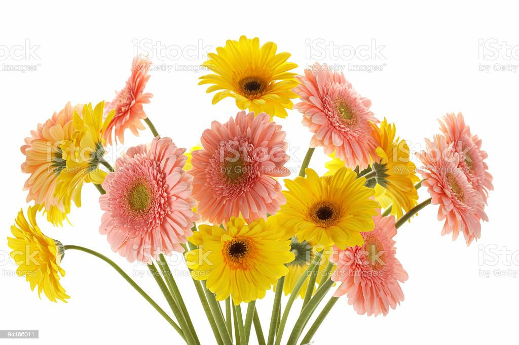 bouquet of pink and yellow gerberas royalty-free stock photo