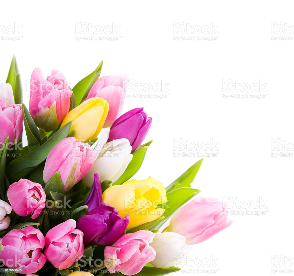Bouquet of pink and yellow tulips on a white background stock photo