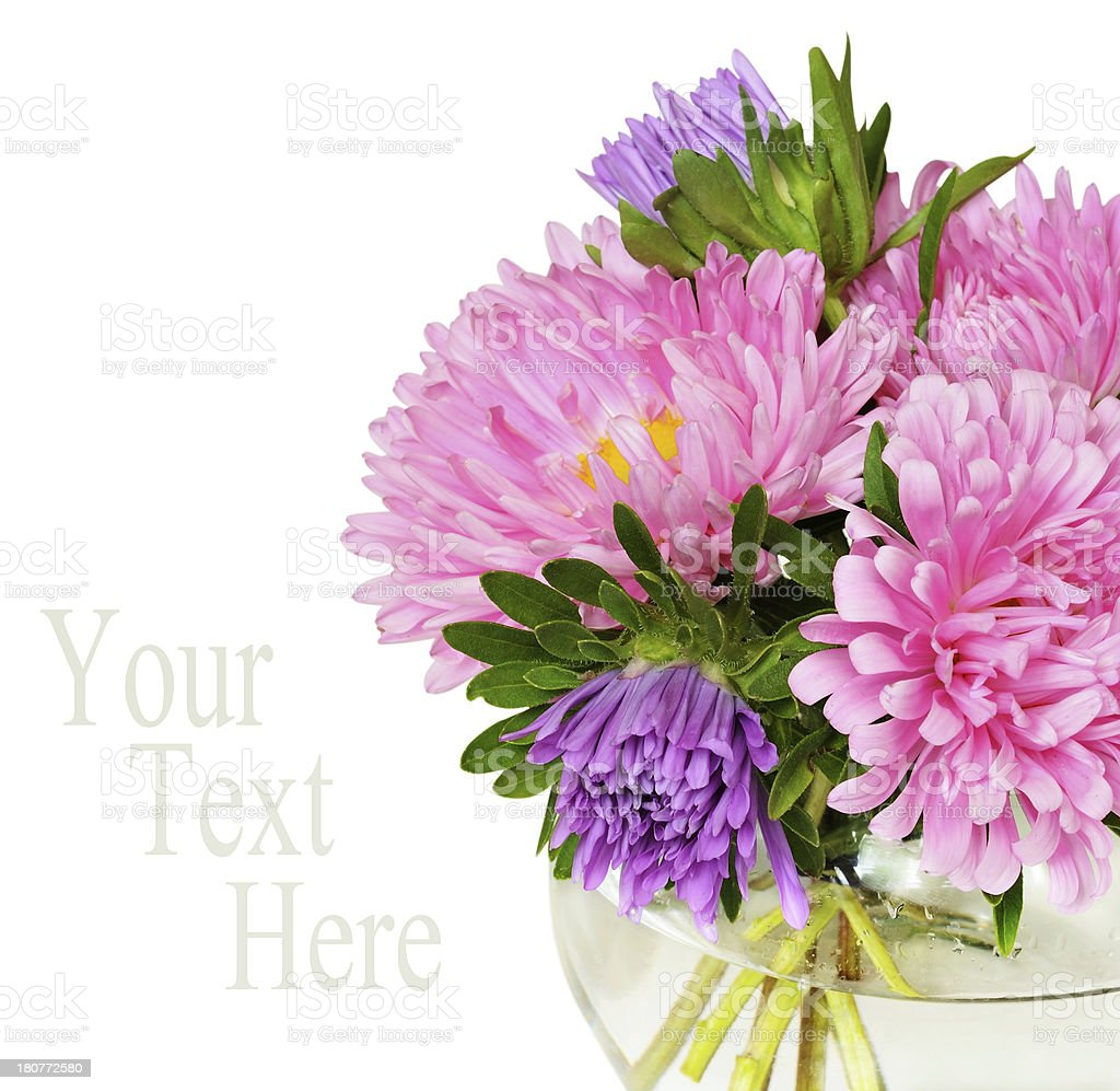 Bouquet of pink asters royalty-free stock photo