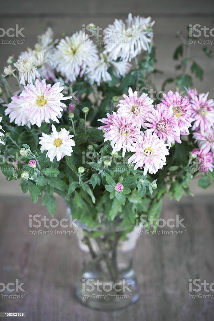 꽃다발 핑크 국화 royalty-free 스톡 사진