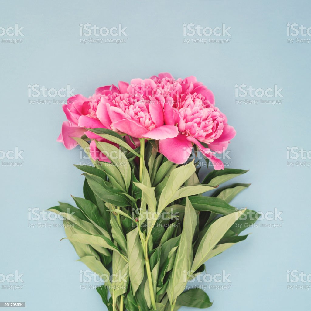Bouquet of pink peony flowers. royalty-free stock photo
