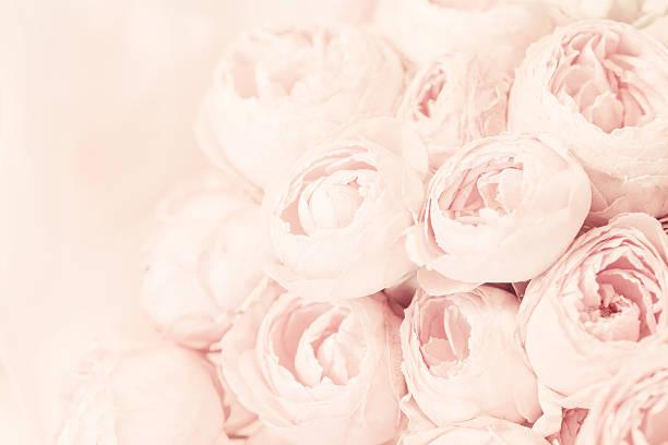 Bouquet de roses rose pivoine - Photo