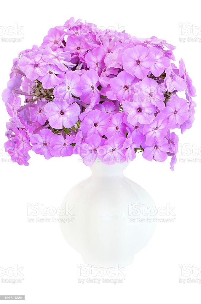 Bouquet of pink phlox in a ceramic vase royalty-free stock photo