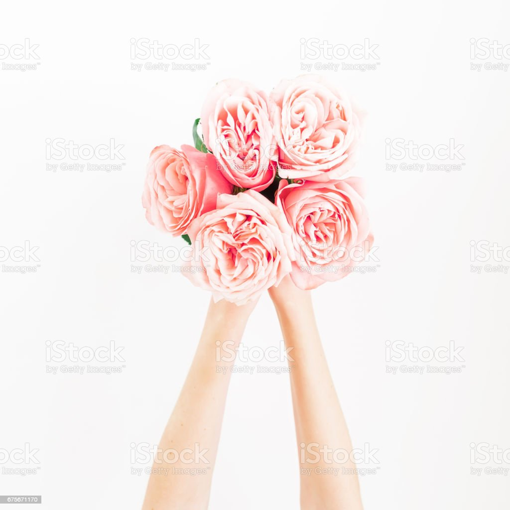 Bouquet of pink roses in feminini hands on white background. Flat lay, top view. royalty-free stock photo