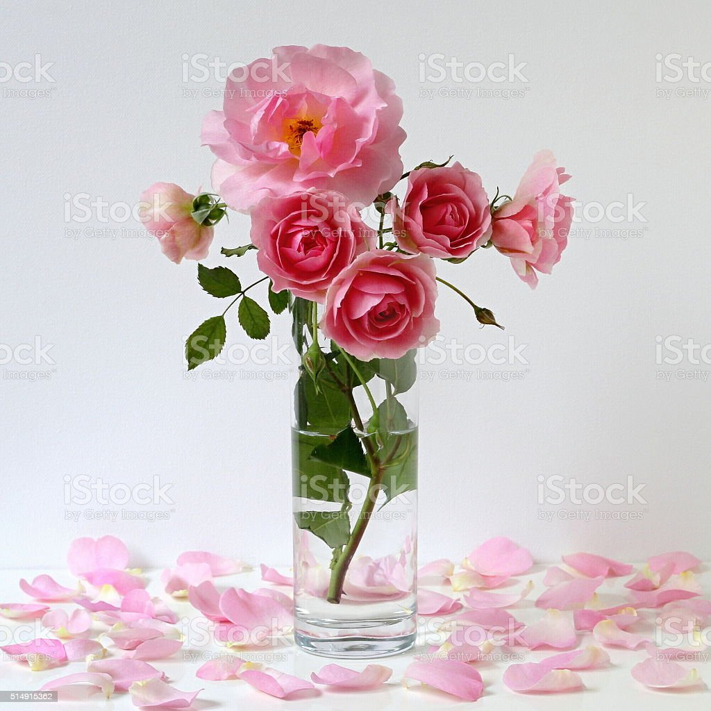 Bouquet Of Pink Roses In Vase Romantic Floral Still Life Stock Photo