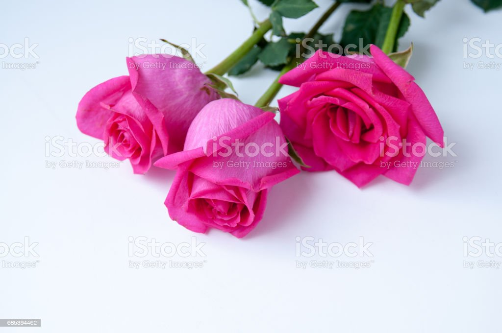 Bouquet of pink roses lies on a table foto de stock royalty-free
