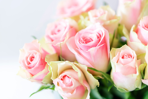 Bouquet of pink roses.