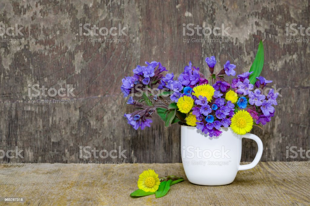 Bouquet of primroses blue lungwort in white enameled metal mug on table and vintage background, grunge with place for text, vintage, zbiór zdjęć royalty-free