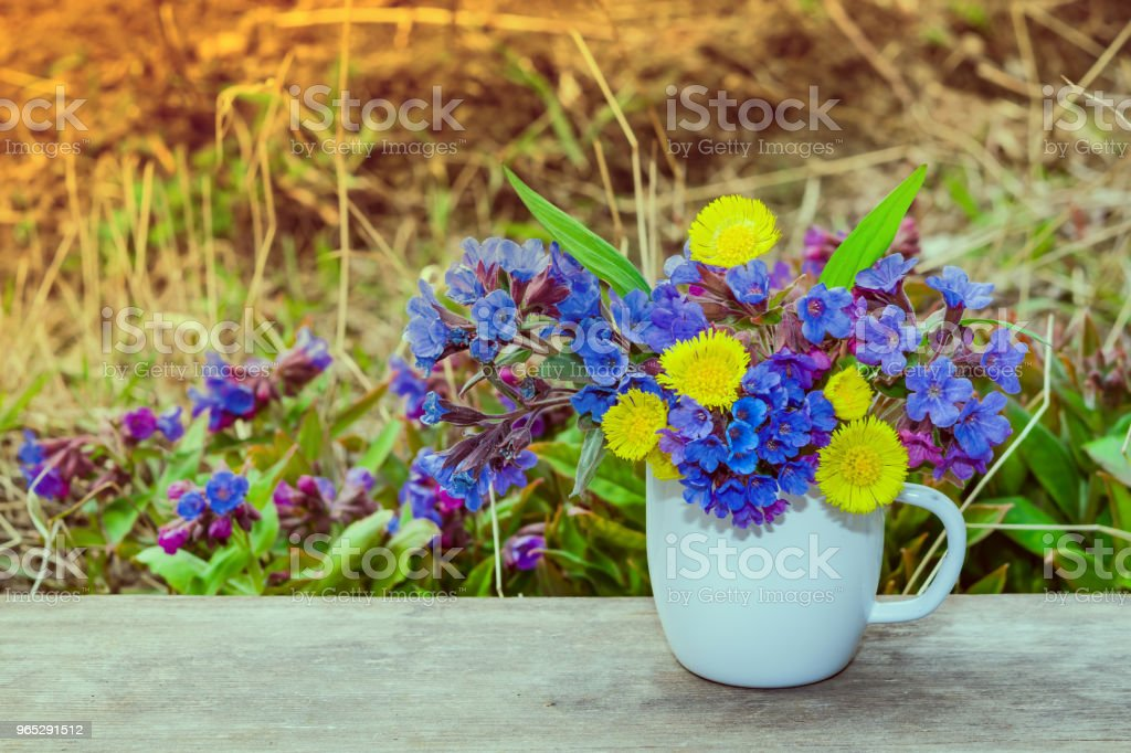Bouquet of primroses blue lungwort in white enameled metal mug on grass and flowers background with space for text, vintage, royalty-free stock photo