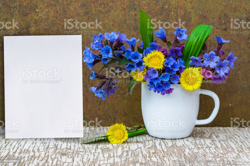 Bouquet of primroses blue lungwort in white enameled metal mug on table and vintage background, grunge with white paper sheet for text, vintage, copy space, royalty-free stock photo
