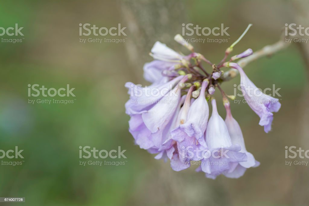 Bouquet of purple flowers on a blurry background. royalty-free stock photo