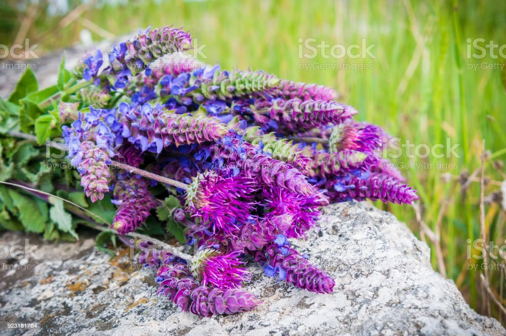 Bouquet Of Purple Flowers The Rocks In The Garden Stock Photo & More ...