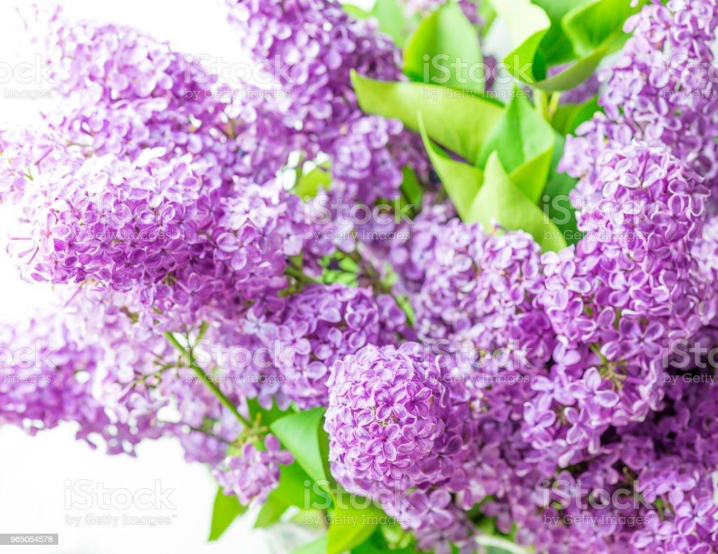 Bouquet of purple lilac zbiór zdjęć royalty-free