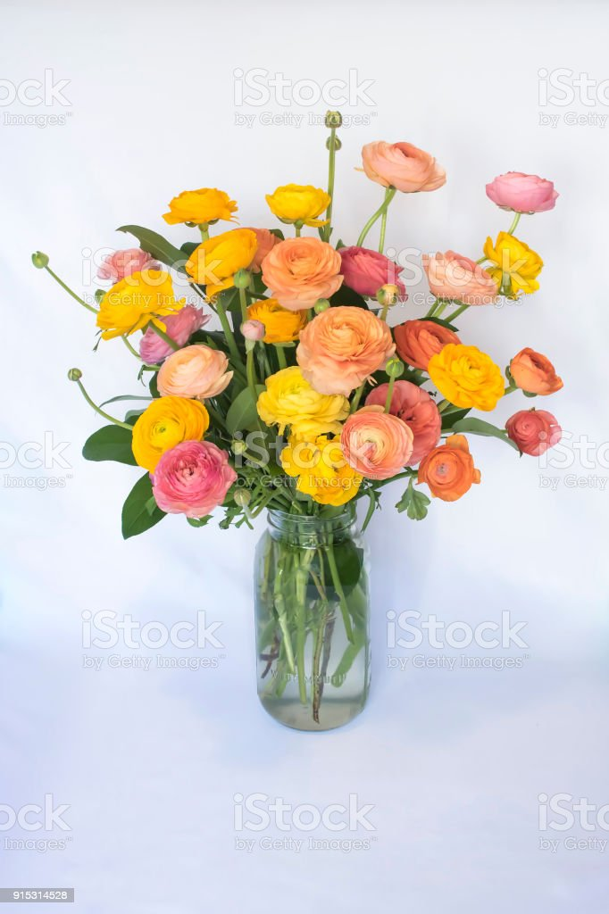 Bouquet of Ranunculus Flowers on White Background stock photo