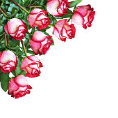istock Bouquet of red and white rose flowers in a corner arrangement 1002090418