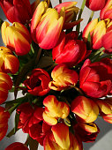 Bouquet of red and yellow tulips, top view