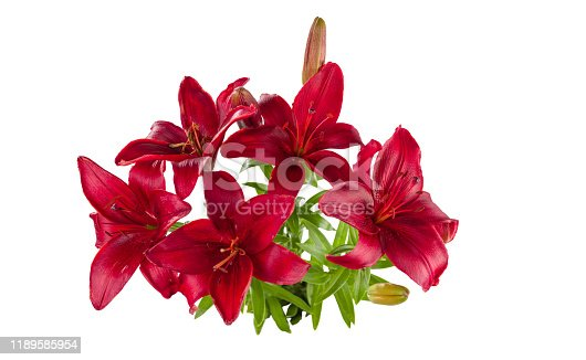 A bouquet of red daylilies. Isolated on a white background.