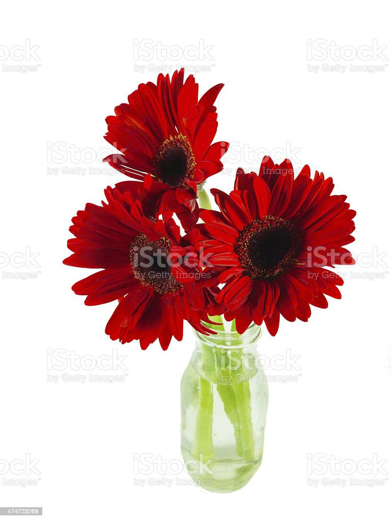 Bouquet of red Gerbera daisies isolated on white background stock photo