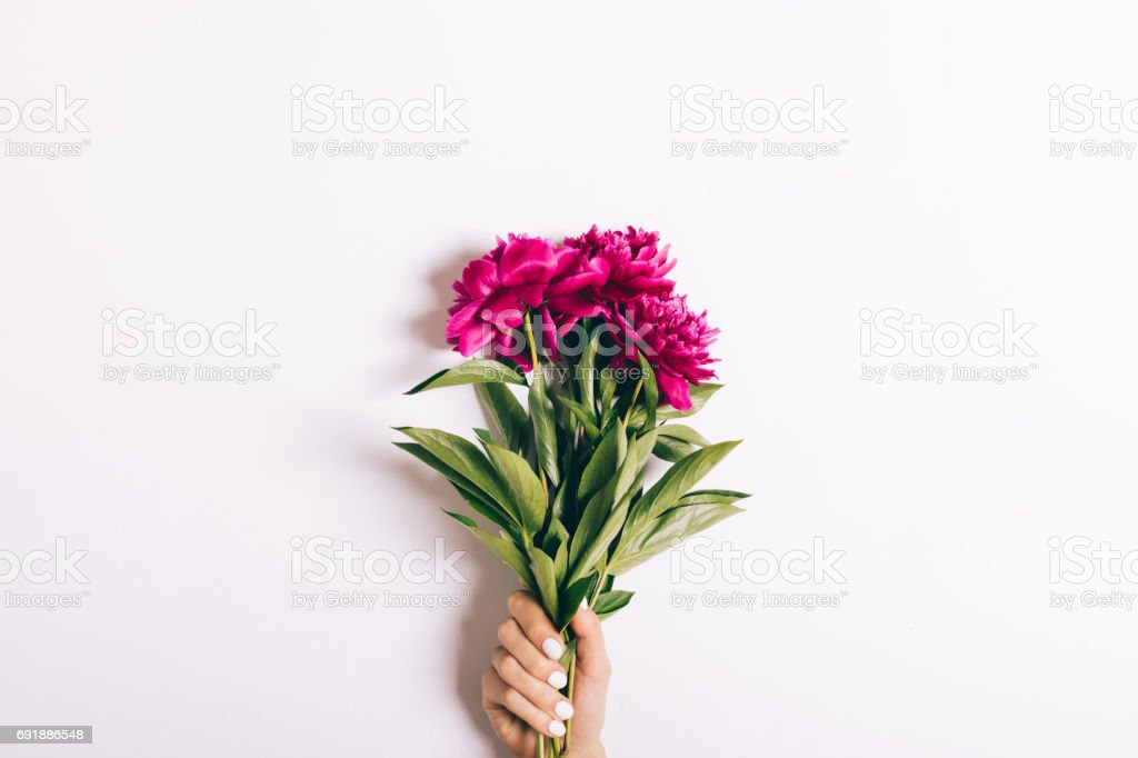 Bouquet of red peonies in a female hand with a manicure on a white background