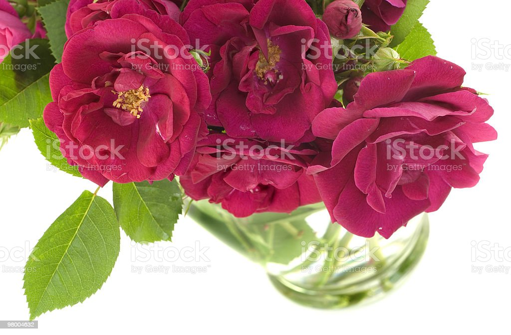 Bouquet of Red Roses in Vase royalty-free stock photo
